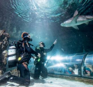 2 dykkere dykker med haj