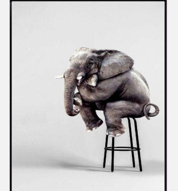 elefant der sidder på barstol