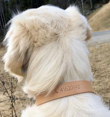 hund med laederhalsbaand