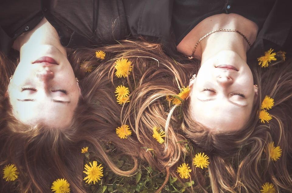 2 veninder ligger og slapper afi græsset med mælkebøtter